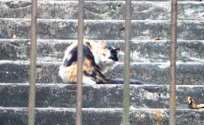 First kitty spotted in YueXiu Park, Guangzhou, China