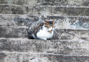 This little kitty was enjoying some birdwatching in her home in Yue Xiu park, which is also the home to the Five Rams Statue, the emblem of Guangzhou