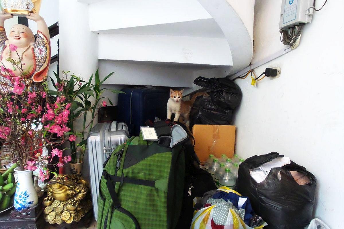 Can you spot the kitty at Especen Hostel in Hanoi, Vietnam?