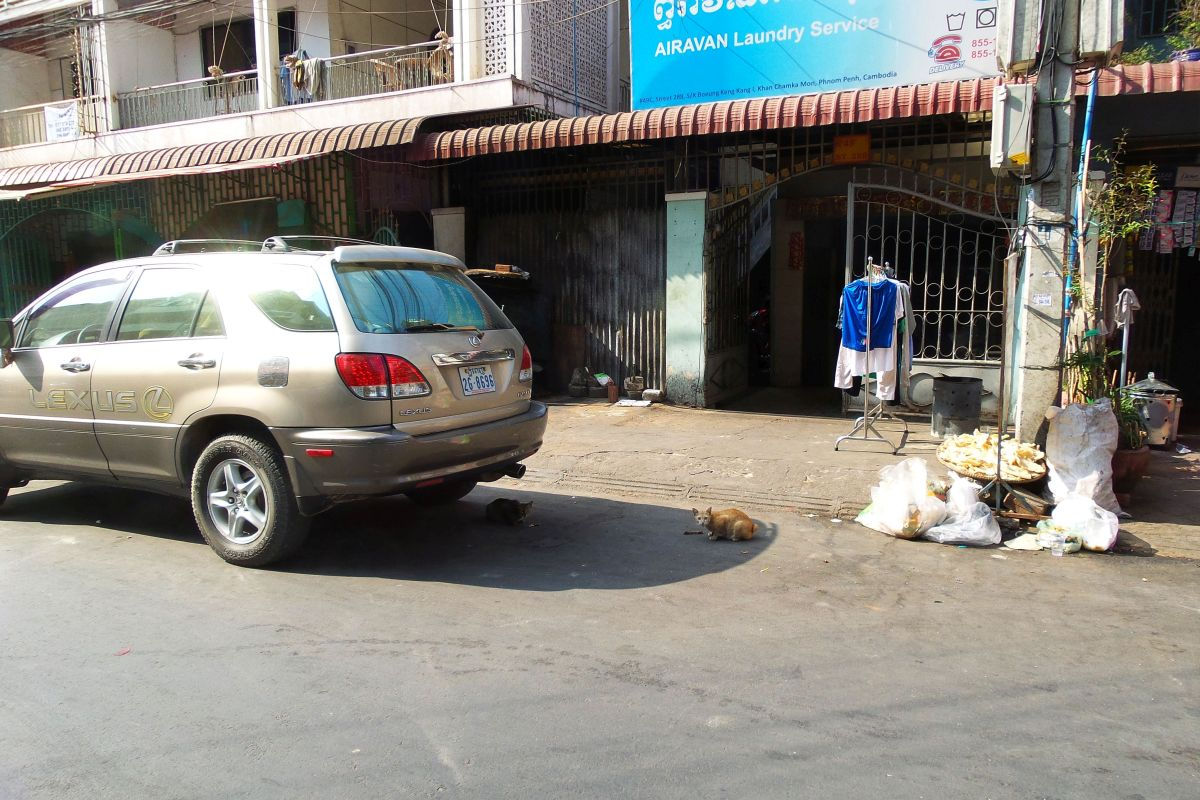 The first and second Phnom Penh kitties we spotted were a bit nervous. Can you spot them?