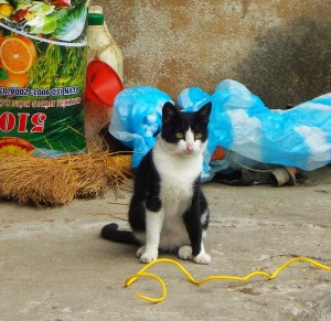 Here he is, the first kitty we spotted on Cat Ba. He looks like a bit of a derp, but I guess he was spotted in the middle of licking himself.