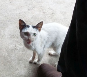 Here is Cat Ba kitty 4 requesting another bite of lunch. But it wasn't just the food; this kitty seriously loved love!