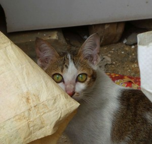 This sweetheart wouldn't come out, but I managed to get close enough to snap a photo of Phnom Penh kitty number three!