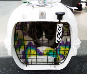 This is Pixie's carrier for travelling in the hold. On this flight, Pixie was told he had to travel as checked luggage due to the airplane's space restraints.
