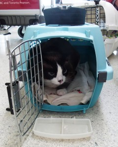 This is Pixie in his carrier for traveling in the cabin. This carrier is small enough to fit under the seat in front of Pixie's humans. A soft carrier can also be used for cabin travel.