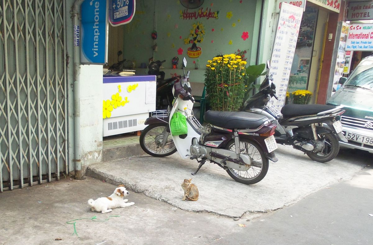 Can you spot this Saigon kitty?