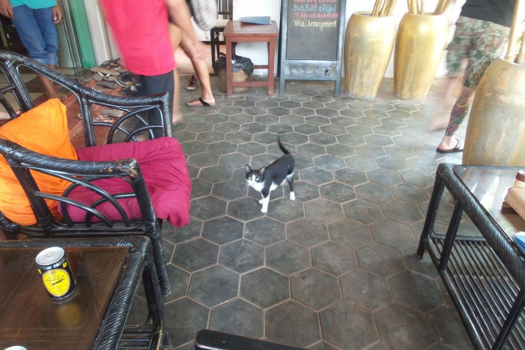 This little kitty was very friendly and not hard to spot at all!