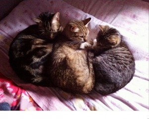 @rinny_and_cats gold medal winners in the event Team Cuddling