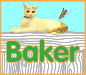 baker's profile button