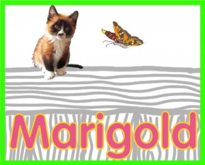 marigold's profile button