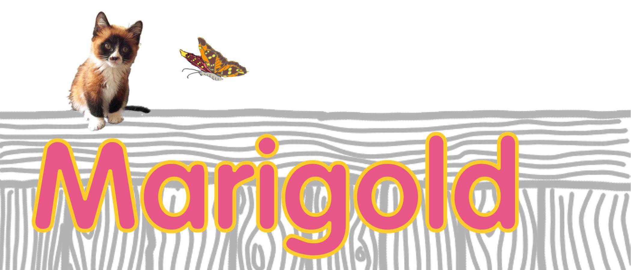 marigold's profile