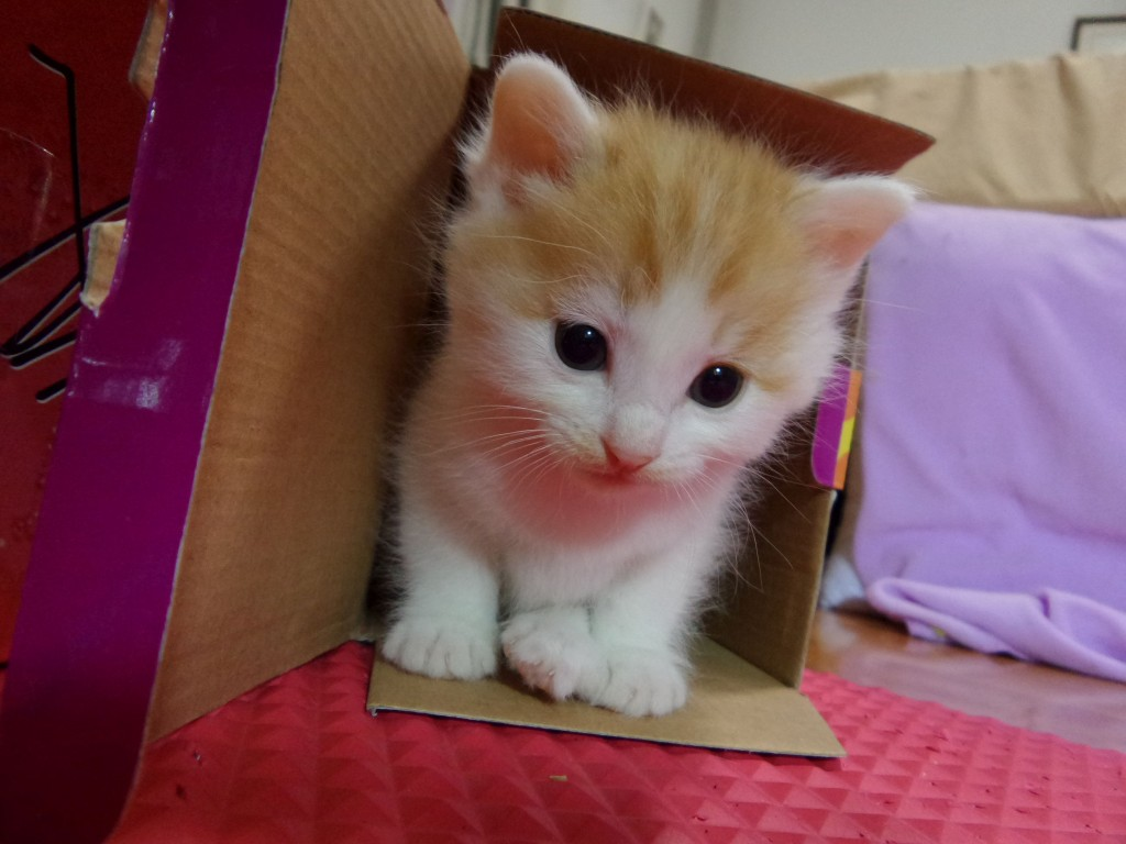 Johnny loves playing in boxes. When I received a mug in a box, the box quickly became Johnny's favourite place to hide.