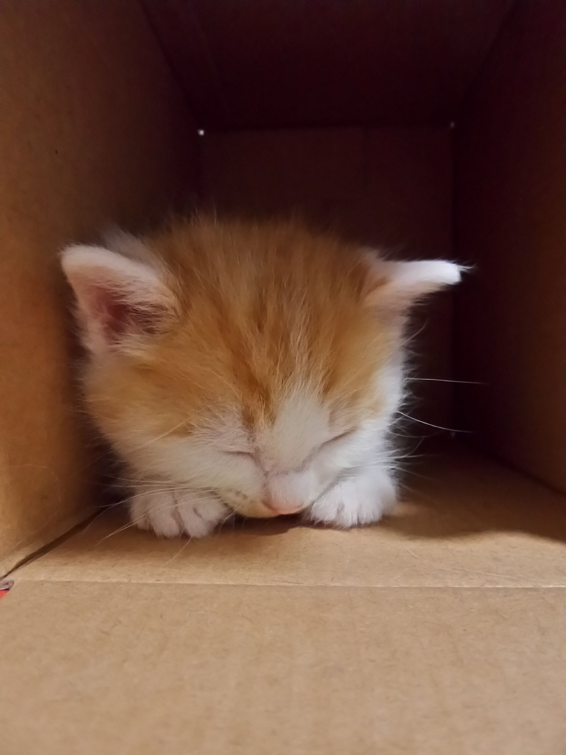 Johnny loved her box so much that she napped in it. Here she is at four weeks. We delivered her to her forever home in this box.