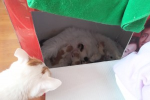 Here's a sneak-peek at the newborn kittens in their kitten box, with Baker peeking in... plotting...