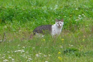 Here she is, stalking prey in the grass!