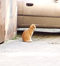 this kitty scampered off before I could zoom in on him, but here is a tiny close-up.