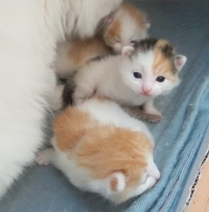Sue is the most intrepid at two weeks and keeps climbing over Mount Mum's Tummy.