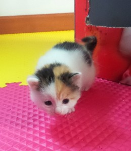 Sue is able to walk and explore at three weeks. She is the first one to leave the box.