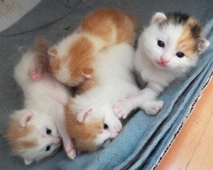 When I went into the kittens' room on their two-week birthday, they all looked at me for the first time