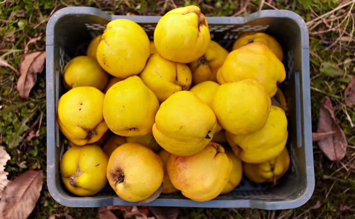 membrillos are quince, like these.