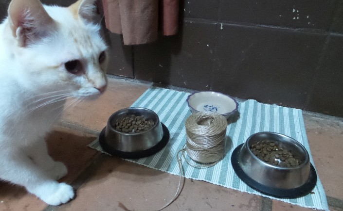 Lancy tries to decide between string and cat food.