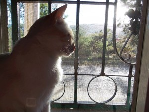 Lancy peeking through the window